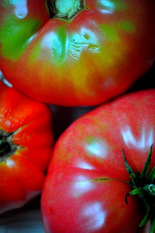 tomatoes1
