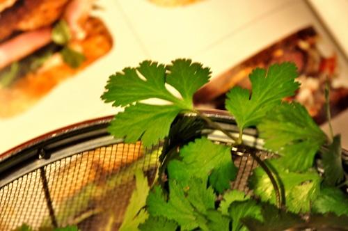 A sprig of cilantro