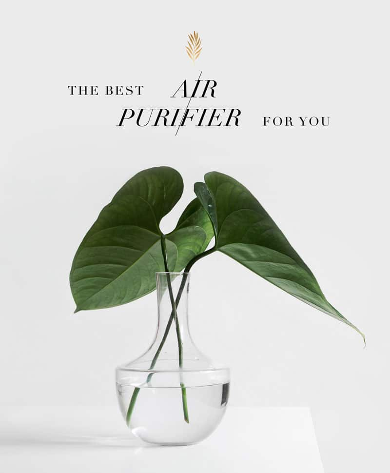 the best air purifier for your home