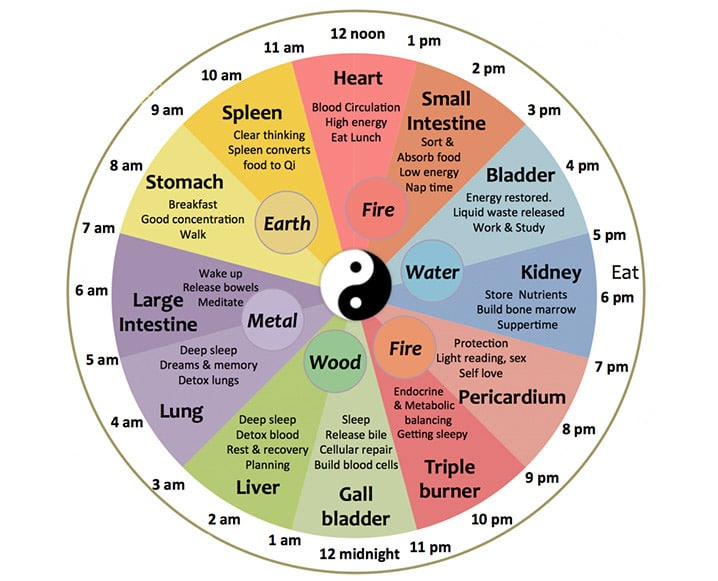 chinese medicine clock for organs