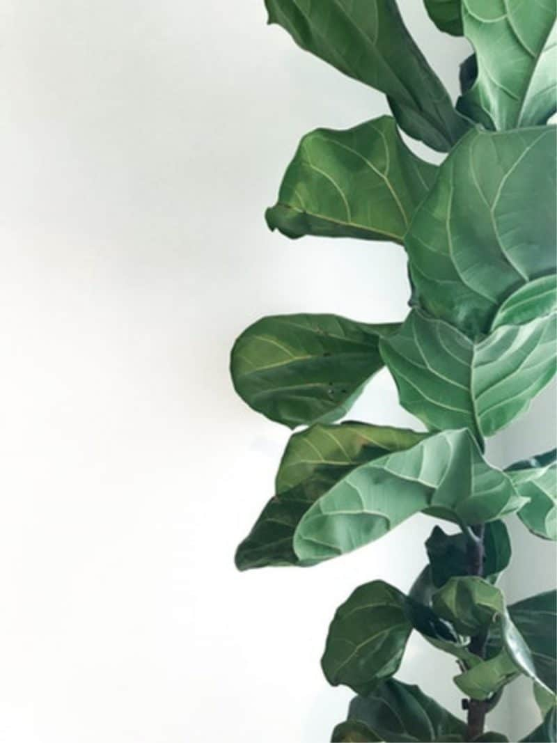 A plant with against a white background